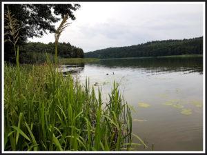 jezioro Grodno_ Nowogród k.Golubia-Dobrzynia