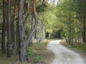 leśna-ścieżka-1280x960