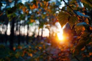 ostatnie-promienie-wsród-drzew